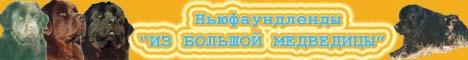 Питомник ньюфаундлендов